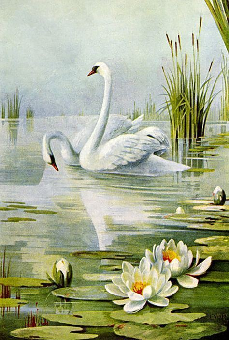 Swans_and_Water_Lilies
