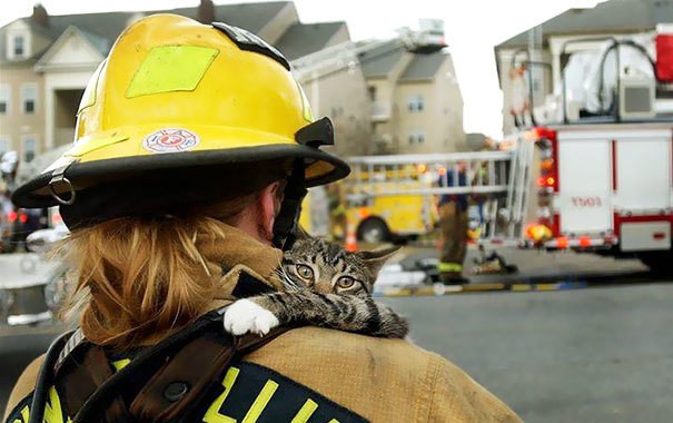 firefighters-rescuing-animals-saving-pets-1-5729a8f7688b4__605