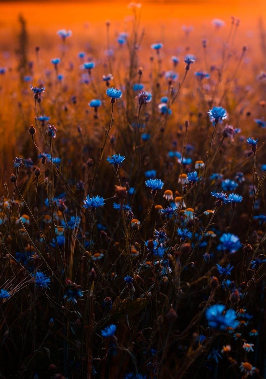صورة زهور