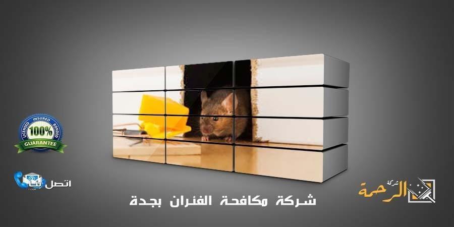 شركة مكافحة الفئران بالرياض L