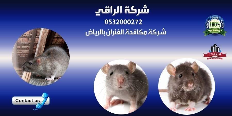 مكافحة الفئران بفاعلية في شركة الراقي L