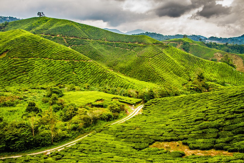 cameron_highlands