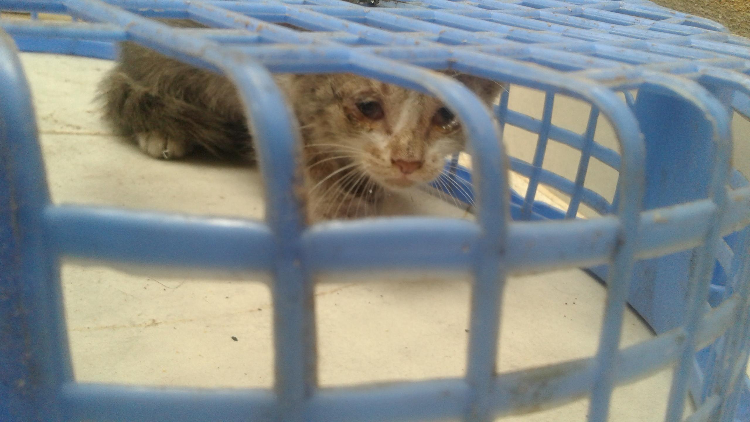 كيف يمكنني مساعدة قطة، عينيها مريضة.
