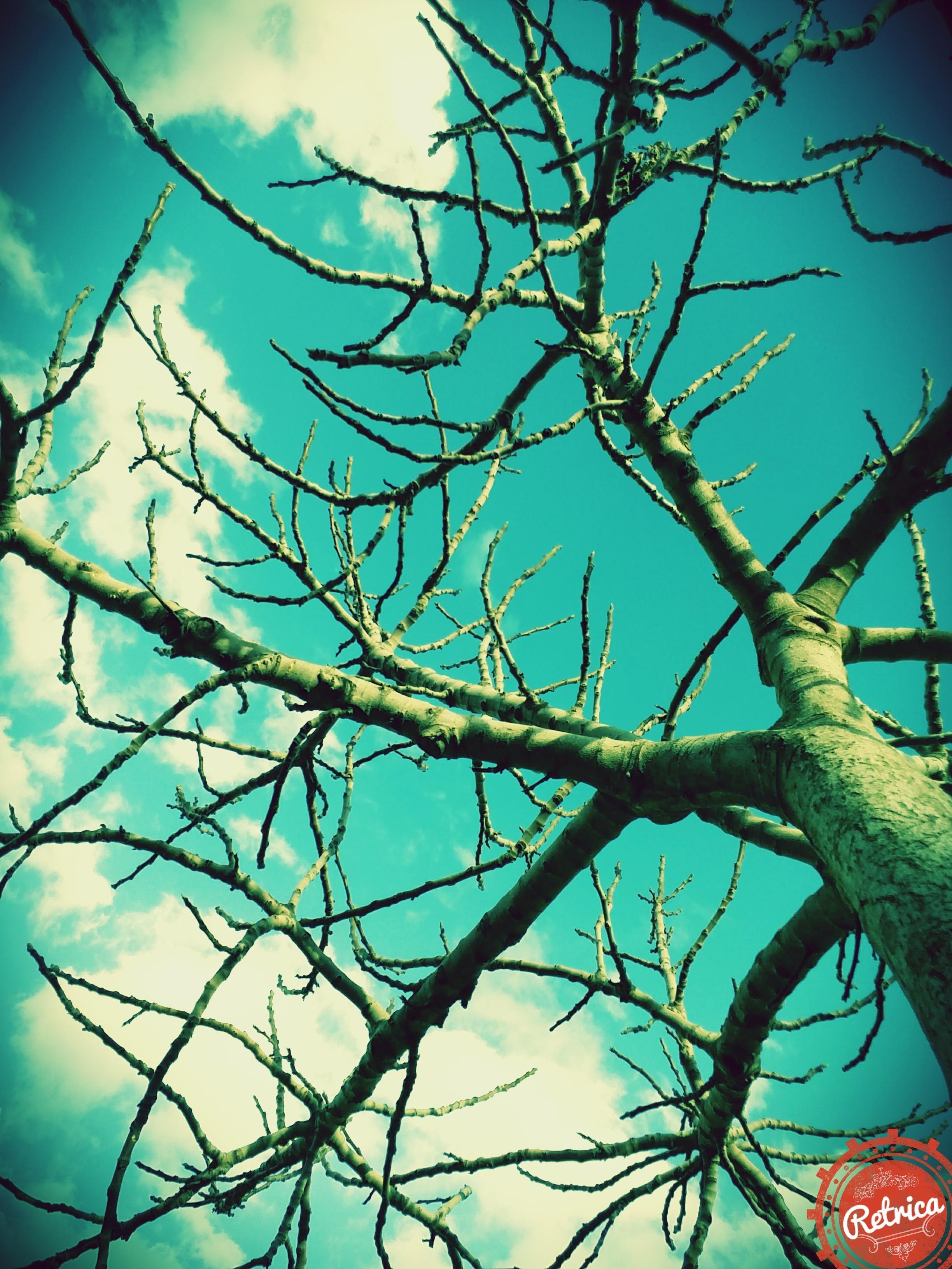 تجربتي : الأستفادة من شجره التين التي كنت أهملها ولا أهتم بها.