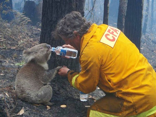 firefighters-rescuing-animals-saving-pets-45-5729f0c4b84c5__605