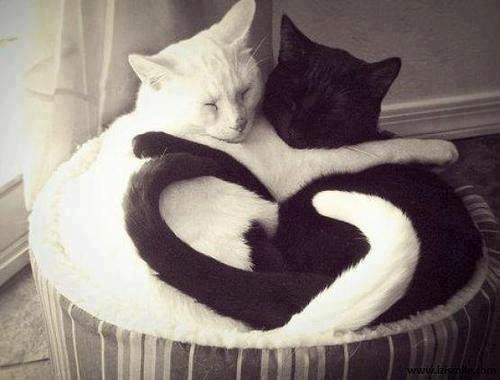 a.baa-Amazing-Black-And-White-Hug