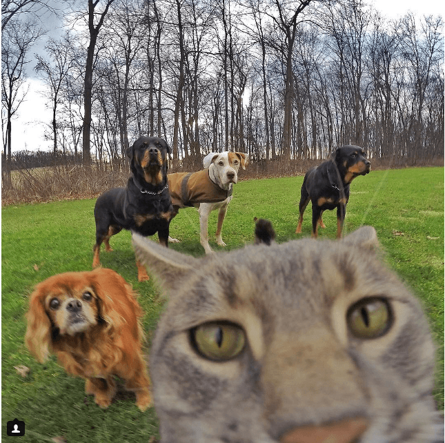 Manny_the_Cat_Has_Mastered_the_Art_of_the_Selfie_2016-04-05_22-18-02