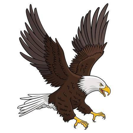 Bald_Eagle_isolated_on_white__This_illustration_can_be_used_as_a_print_on_T-shirts__tattoo_element_or