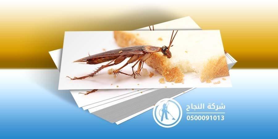 شركة مكافحة حشرات بجازان L