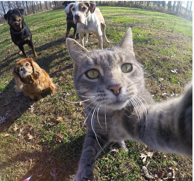 Manny_the_Cat_Has_Mastered_the_Art_of_the_Selfie_2016-04-05_22-23-06